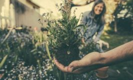Want A Garden That's Good For Your Health?