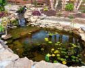 How to Care for Your Pond Like a Pro