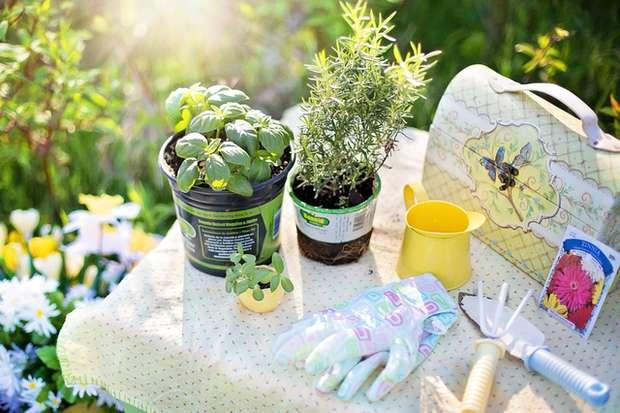 planting herbs summer gardening garden tools
