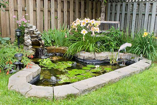 back-yard-fish-pond