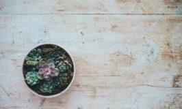Minimalist Rustic Kitchens