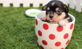 Pet Ownership – What Can You Expect?