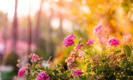 Get A Glorious Garden In Time For Summer!